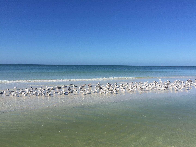 Tigertail Beach, Marco Island. Foto: Emina Kovacic